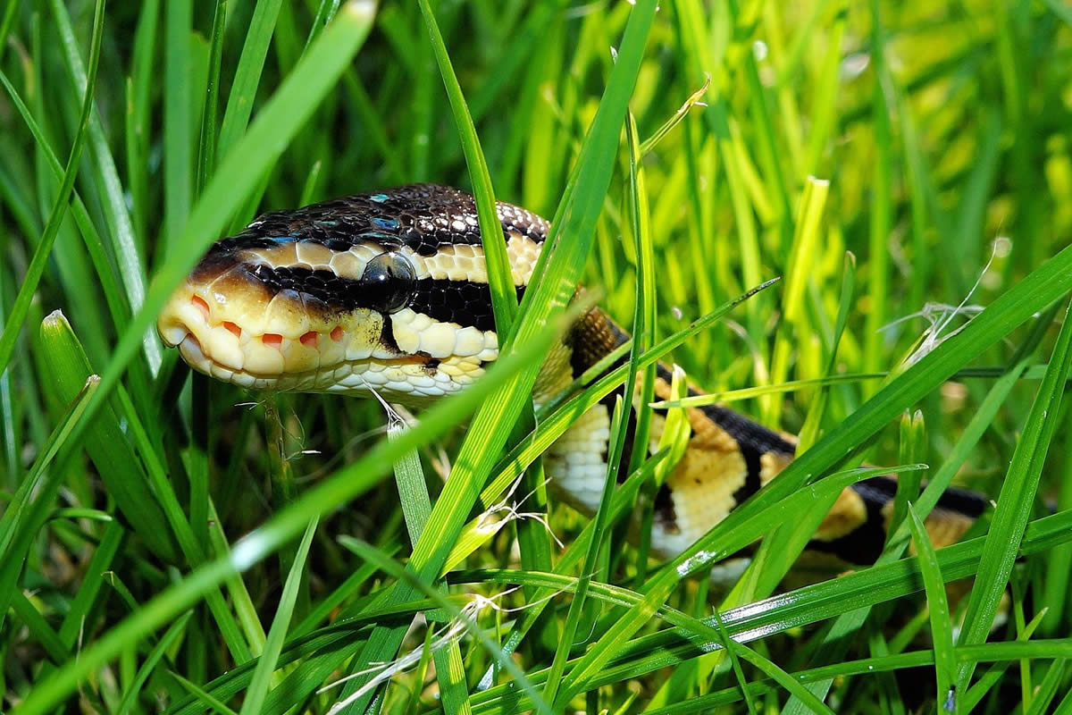 Tips for Staying Clear of Snakes in the Summer