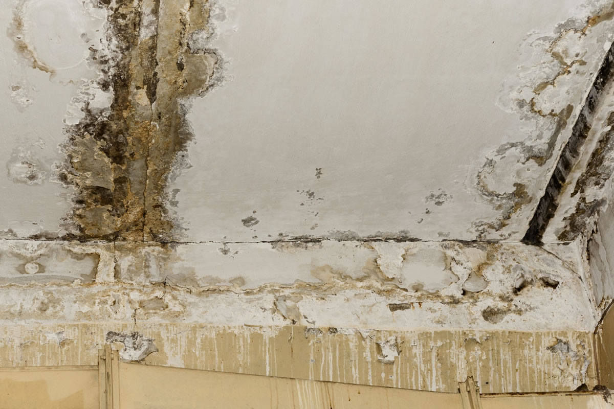 Five Tips to Prevent Mold Growth after Water Damage