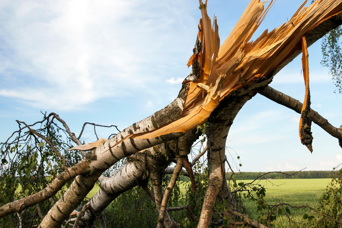 Four Dangers of Overgrown or Tall Trees during Hurricane Season